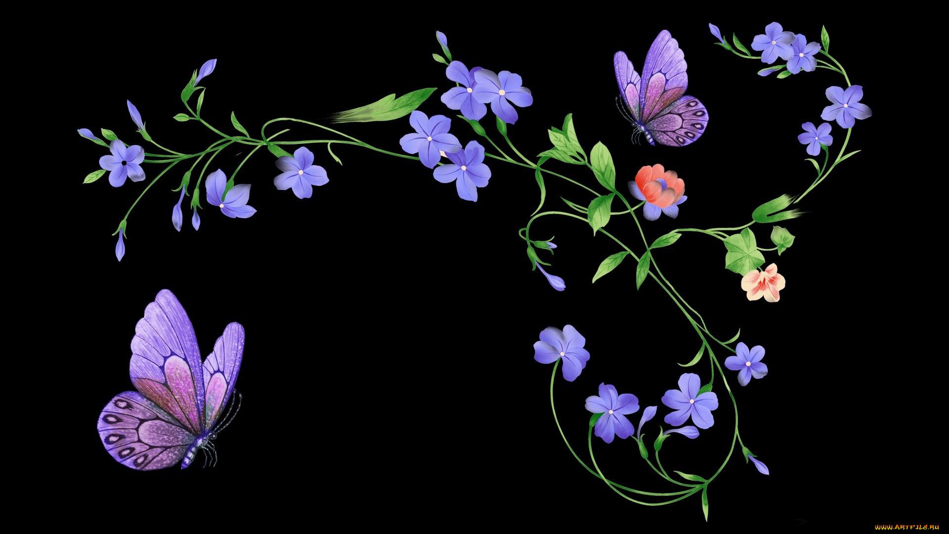 картинки сиреневые цветы на черном фоне настоящий момент гулькина
